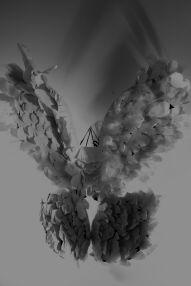 intallation tiltled feathered 2