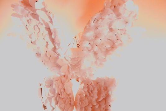intallation tiltled feathered 4